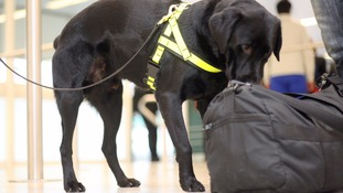 Airport sniffer dogs fail to detect drugs - but found cheese and sausages
