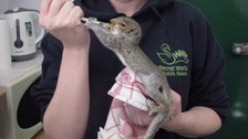 A new room dedicated to caring for orphaned wildlife has opened at a rescue centre in Somerset
