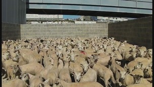 Ramsgate, Kent, animal exports
