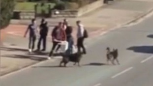 Video: Terrifying moment dog is mauled by two Alsatians