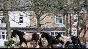 The three horses were spotted in Darlington