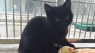 Hermaphrodite kitten astounds staff at cat adoption centre