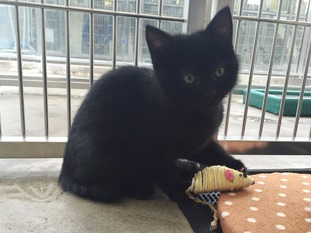 Staff at a Merseyside cat adoption centre thought Bellini was a male kitten.