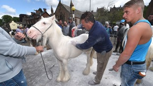 A horse is cleaned at the Horse Fair in Appleby, Cumbria, the annual gathering of gypsies and travellers.