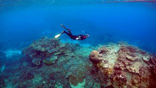 A diver inspects the Reef's condition.