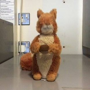 Police launch appeal for owner of child's toy squirrel.