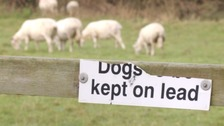 Police say dogs should be kept on a lead when crossing farm land