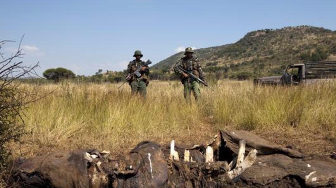 Three park rangers dead after shootout with poachers - ITV ... | 1167 x 654 jpeg 167kB