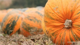 Record breaking plans for £1,250 pumpkin seed