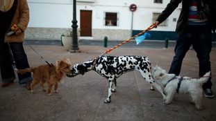 Dog owners walk their pets in Churriana, near Malaga, southern Spain.