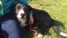 Sheepdog returns home after 240 mile journey from Cockermouth