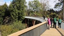 Westonbirt walkway takes visitors into the tree-tops
