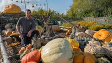 Challenge to grow world's largest pumpkin from a £1250 seed