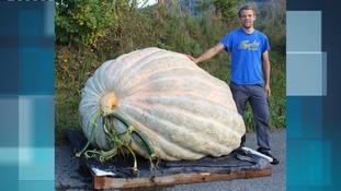 A competition winning pumpkin