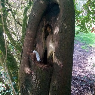 Officers uncover drugs hidden in a tree