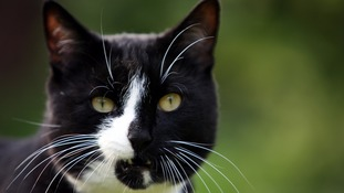 Royal Mail: Restrain your mail-snatching cat or we will halt post