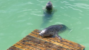 Grey seals lapping up the sunshine