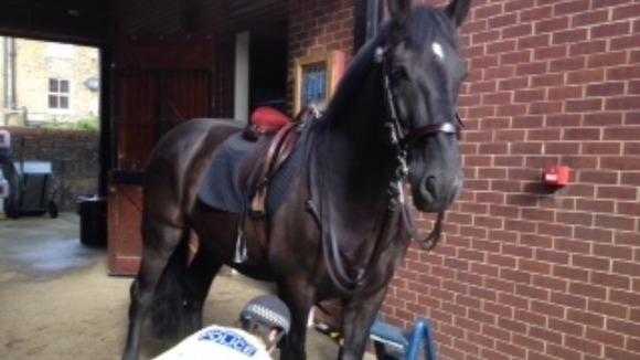 meet police horse in london