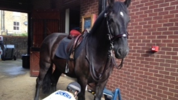 Lorcan, the black gelding Police horse.