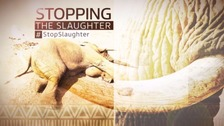 #StopSlaughter: The global poaching crisis