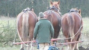 A team of horses ploughing stubble