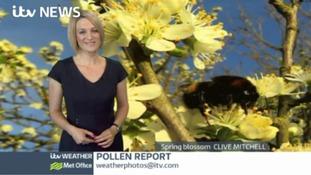 Calendar Pollen Report