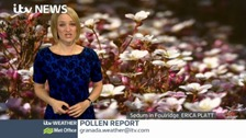 Granada Pollen Count - Tuesday