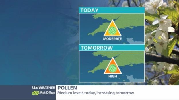 pollen_web_0305