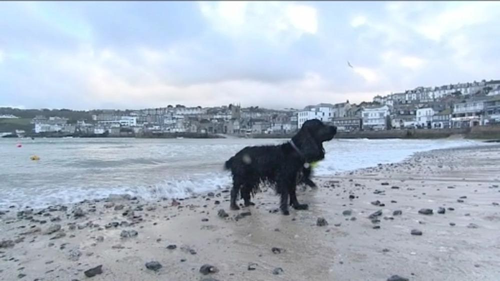Dog Ban Beaches In Cornwall