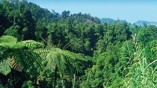 A rainforest in Sumatra, Indonesia.