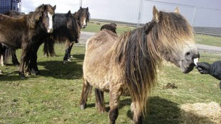 Can you help find the owner of these mistreated horses?