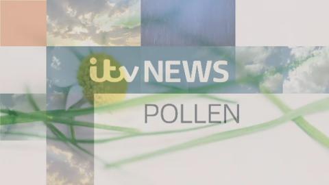 TB04_Lunch_Pollen