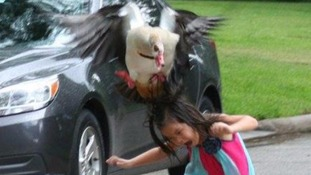 'The pictures make me laugh so hard': Sister shares images of young sibling being attacked by goose