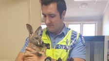 Cuejo was attacked by an eagle, but rescued by his adopted 'dad', police officer Scott Mason