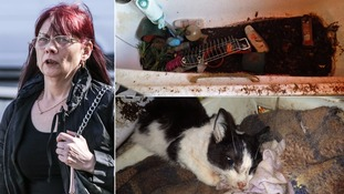 Woman jailed for 'horrendous' animal neglect