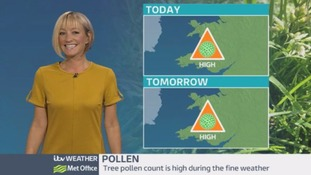Pollen count: Tree pollen levels are high!