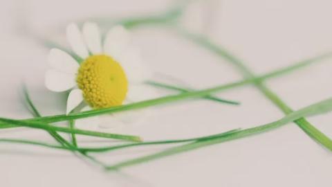 Thursday_Lunchtime_pollen
