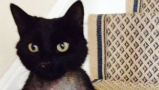 Tom was found injured near his home
