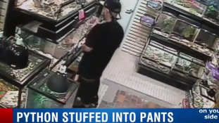 Is that a python in your pocket? Florida man tries to steal snake by stuffing it down his trousers