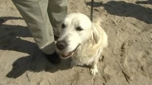 Dog ban row continues in St Ives