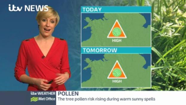 Pollen_web