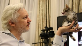 Kitten keeps WikiLeaks founder company as he nears four years in embassy