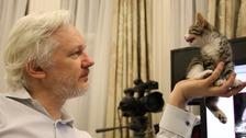 Julian Assange has a new companion in the Ecuadorian embassy
