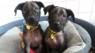 Meet Neil and Nigel - the hairless pups looking for a home