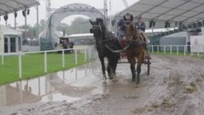 Horses in showground