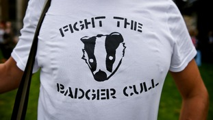 Man wears a 'Fight the Badger Cull' t-shirt