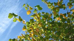 Spring sunshine and new leaves ANNE HOPPER