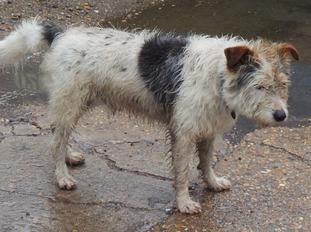 Dog survives accidental swim through the Thames Barrier.