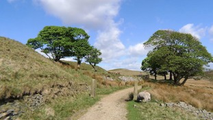 A weekend walk through Drinkwaters at Great Fell, Lancashire  BRIAN FISHER