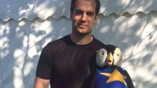 Henry Cavill poses with our very own Oscar Puffin!